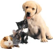 Petastic Care- Dog Walking, Horse Grooming and Livestock Visits
