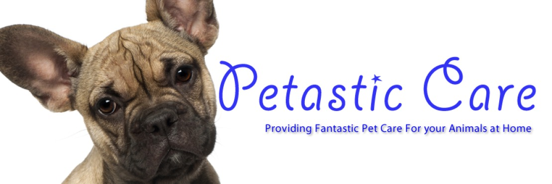 Petastic Care- Horse Grooming, Dog Walking and Animal Care Services